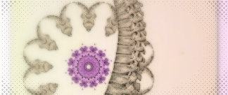 spinal3